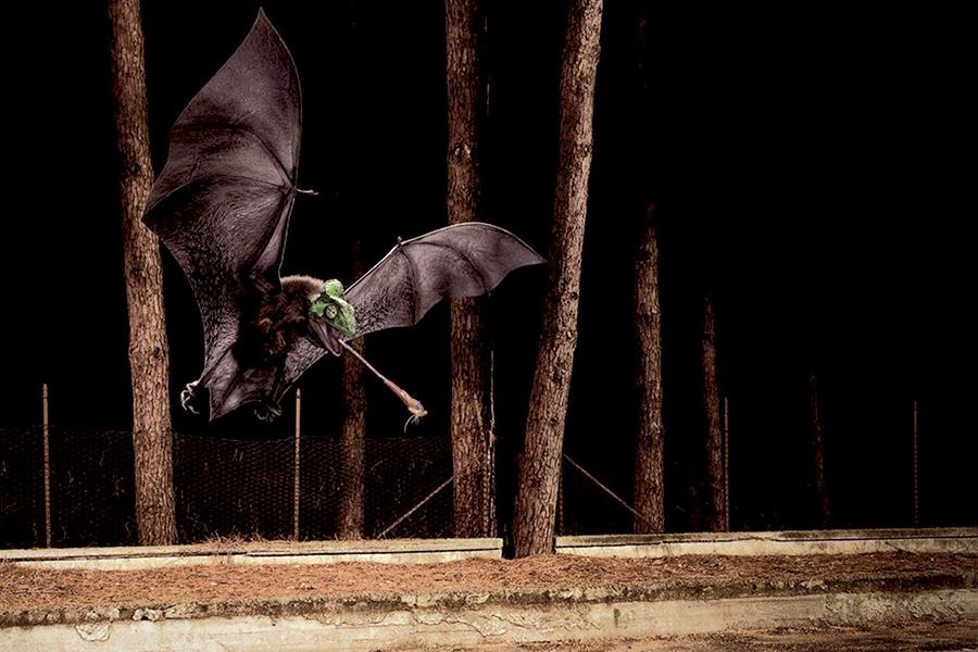 Rendering 3D Pipistrello realizzato da Idee e Soluzioni