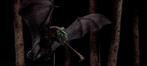 Immagine pipistrello