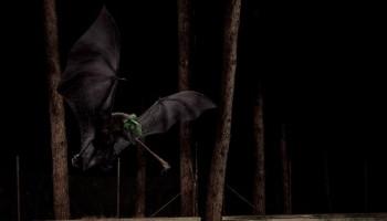 Modello 3D Di Un Pipistrello Per Concorso Internazionale